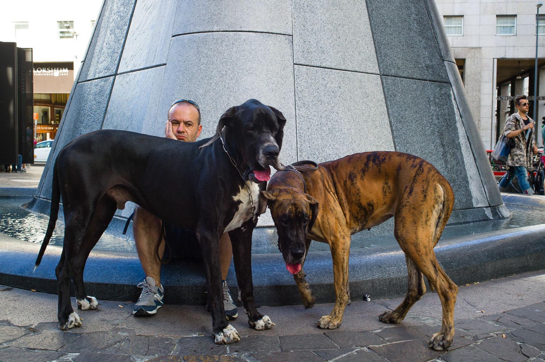 12 - Big Dogs