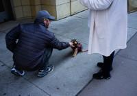 Pet Love 01 (Chicago)