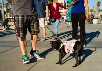 Cold Dog (Huntington Beach - California)